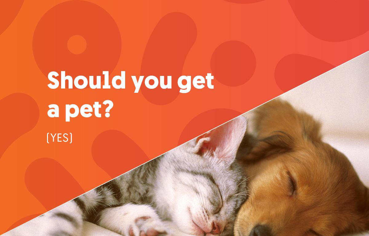 Should you get a pet?